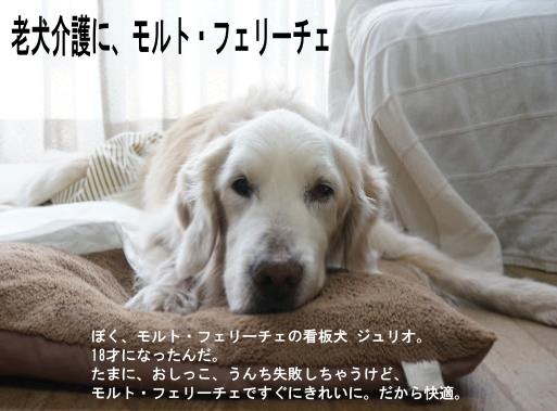 老犬介護に